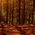 pjp-nature-autumn-season-wood-leaves-fallen-leaves-wallpaper-1